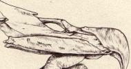 Hand Beak